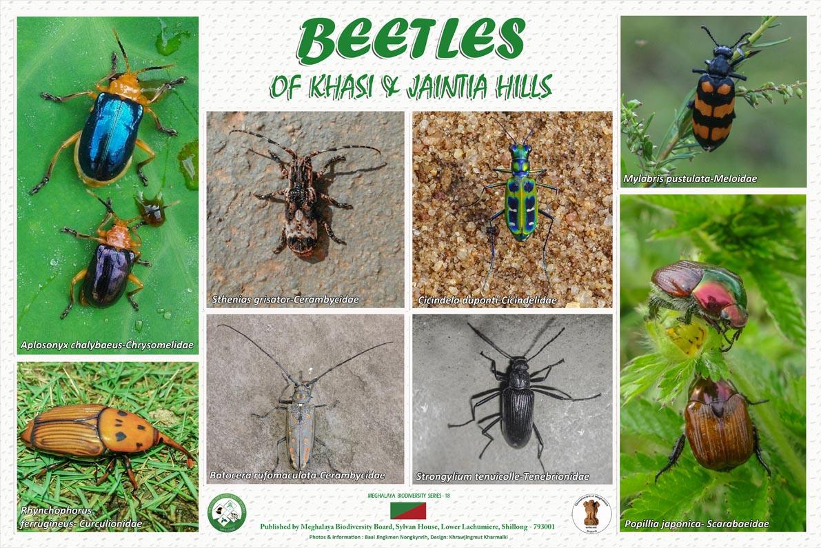 Beetles of Khasi and Jaintia Hills