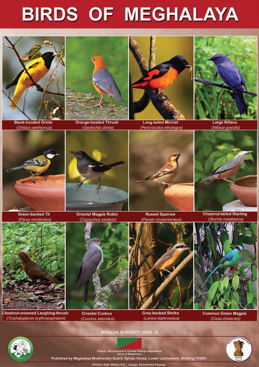 Birds,Meghalaya