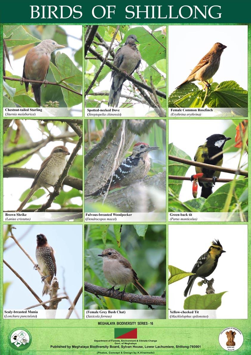 Birds,Shillong