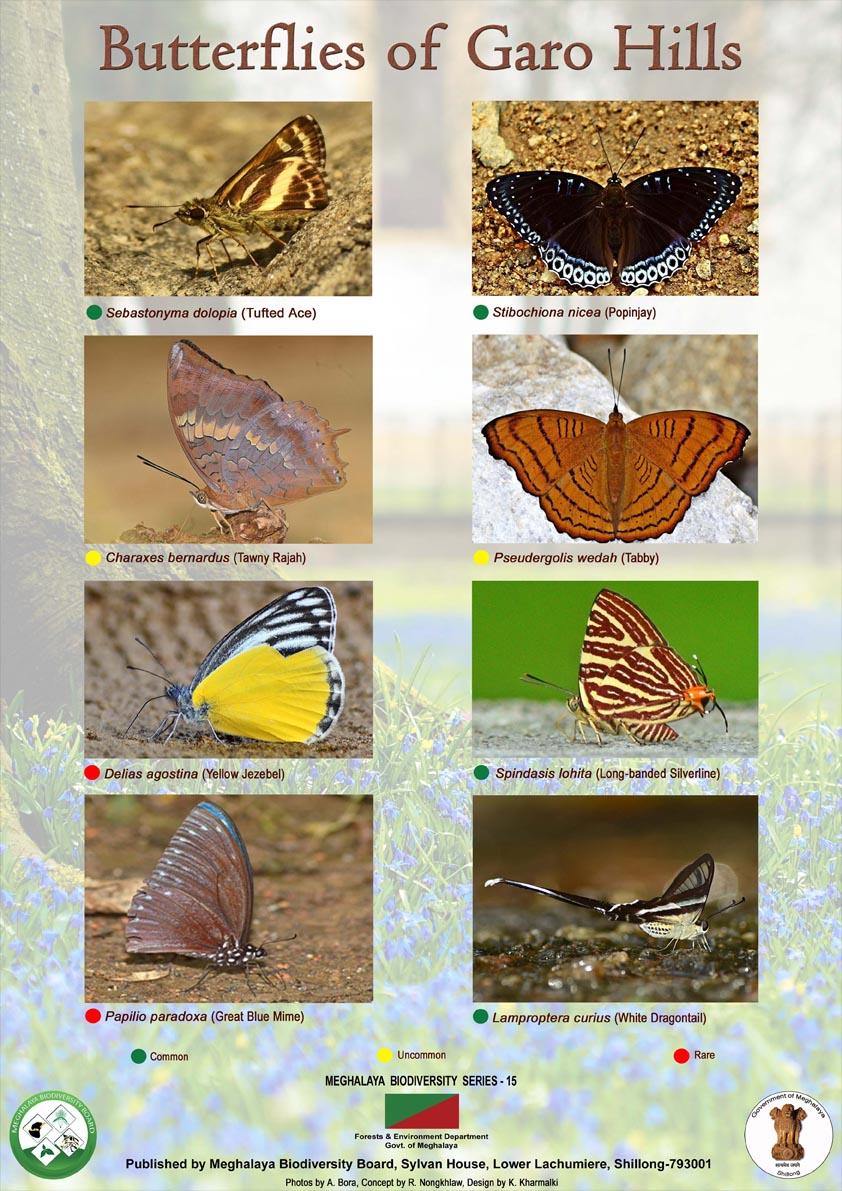 Butterfly-Garo