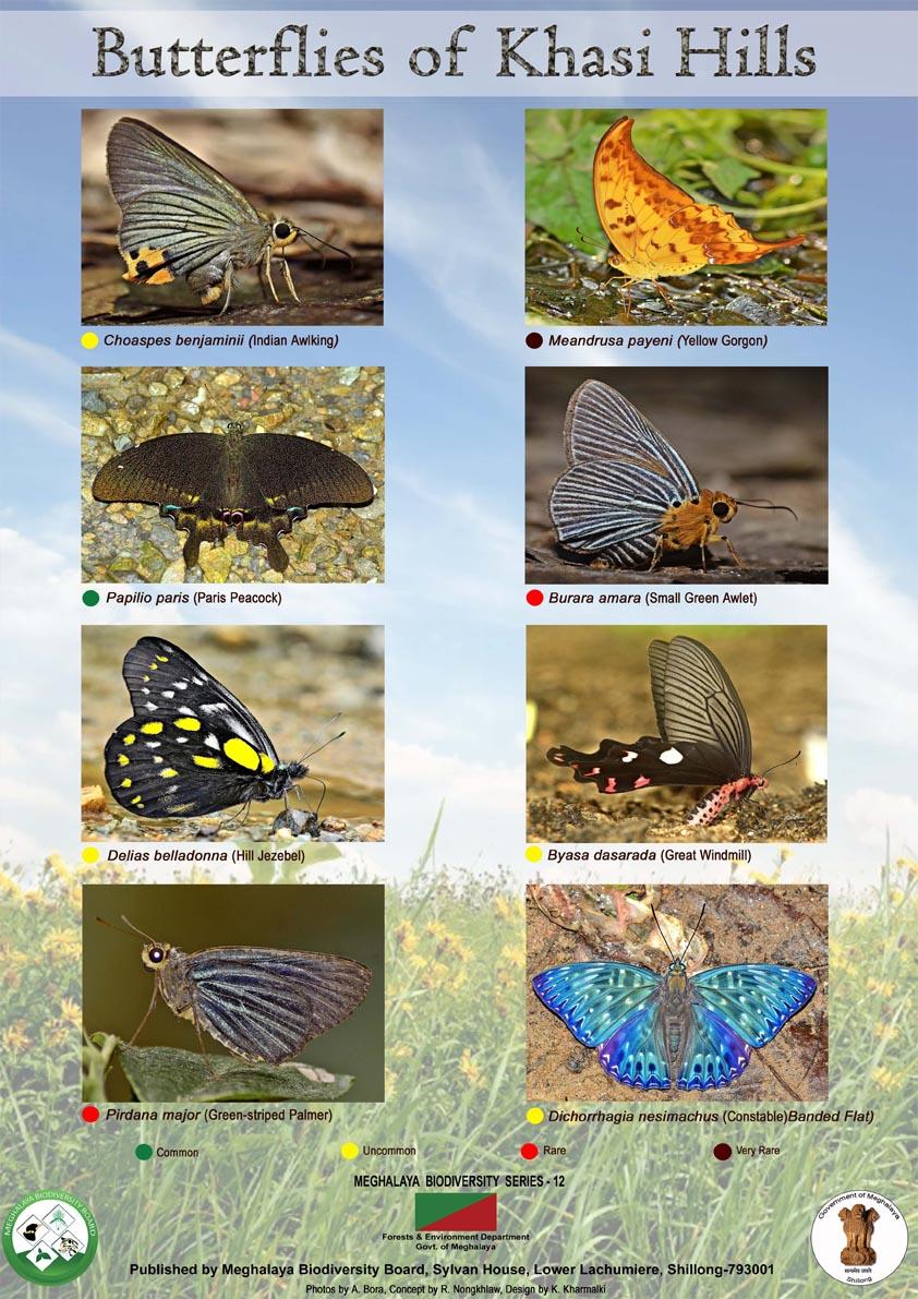 Butterfly-khasi