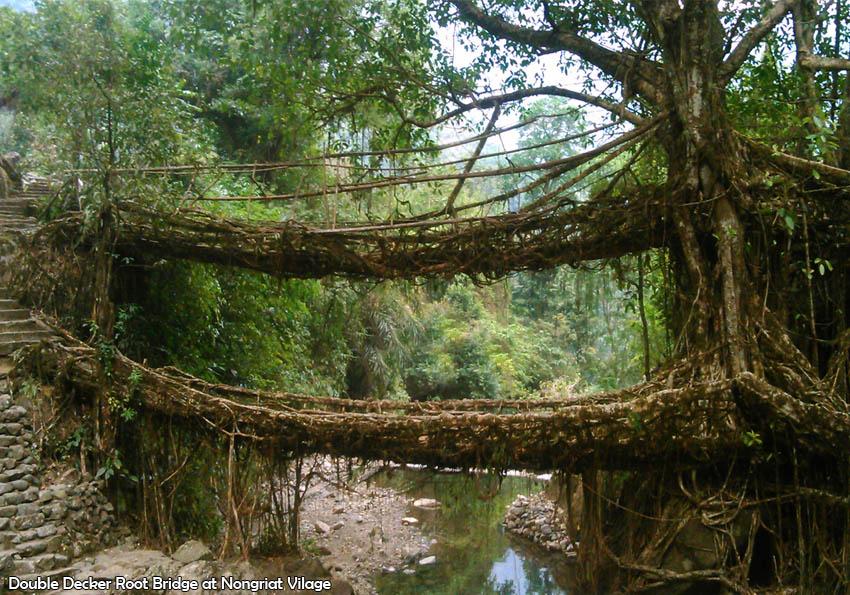 Root Bridge - Double Decker
