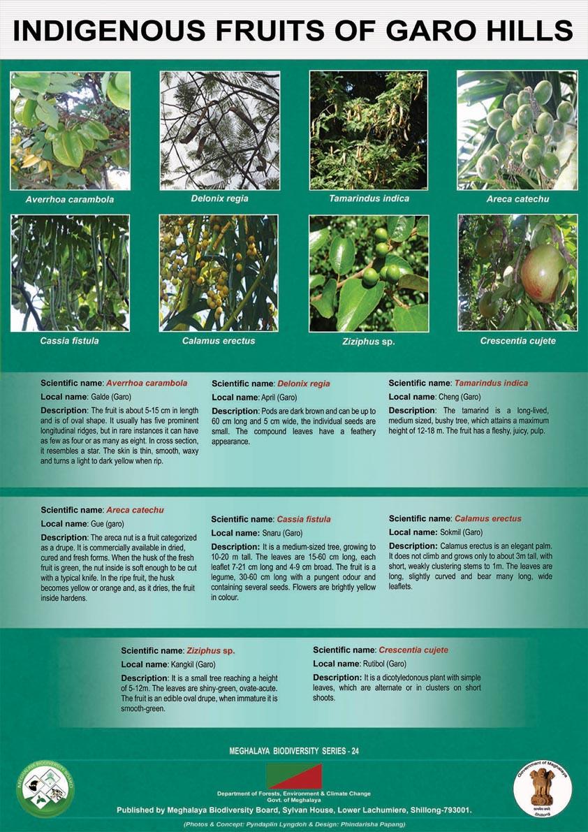 Indigenous Fruits-Garo