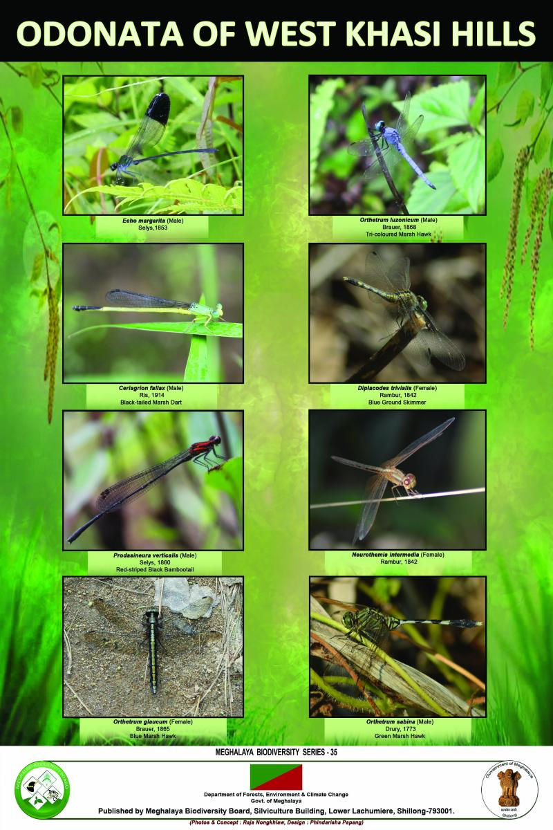 Odonata of West Khasi Hills