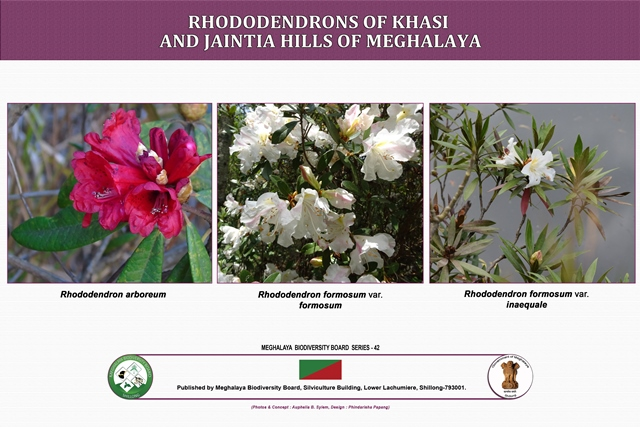 Rhododendrons of Khasi and Jaintia Hills
