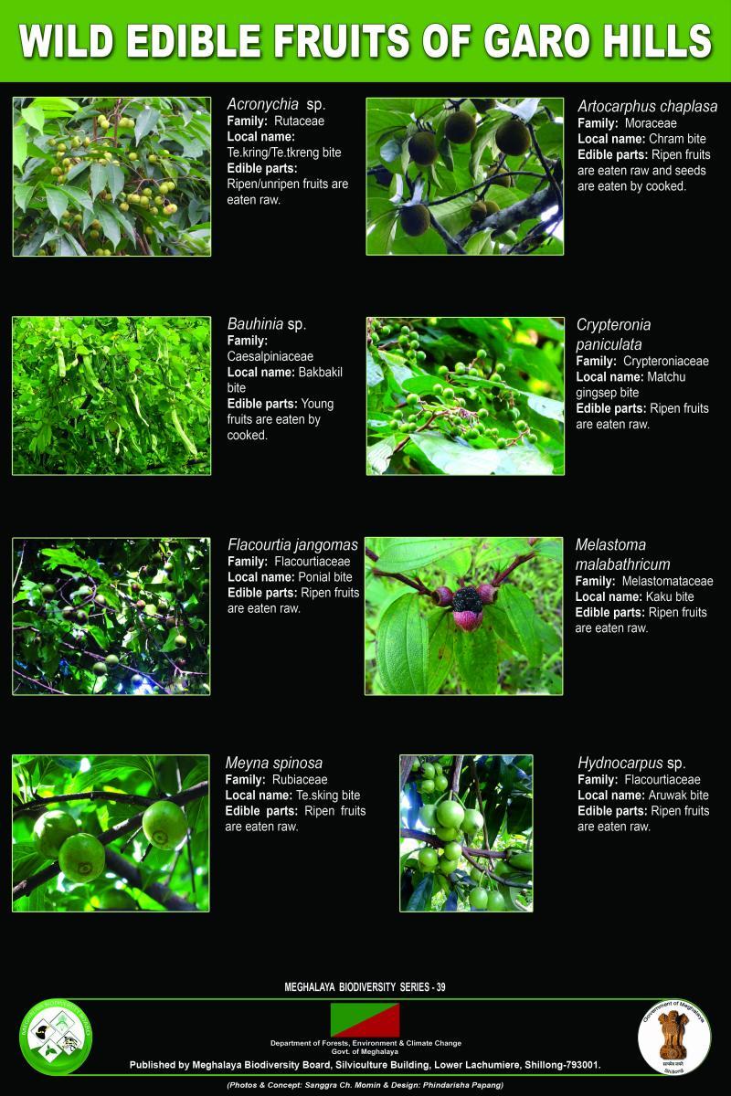Wild Edible Fruits of Garo Hills