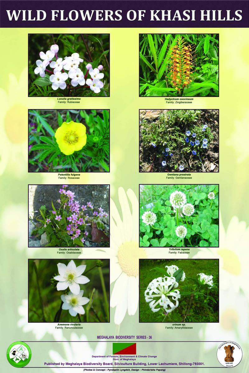 Wild Flowers of Khasi Hills