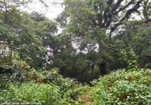 Lalong,Jowai Sacred Grove in Meghalaya Image