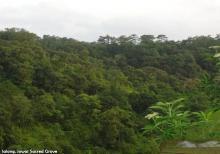 Jowai Sacred Grove