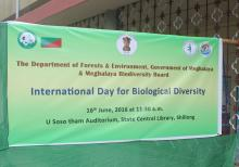 Banner on International Day