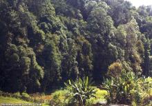 Jowai -sacred Grove