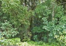 Tuber trees